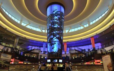 Asian Beauty – World Of Casino